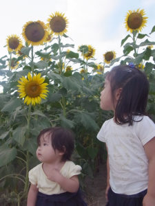 ひまわり畑と子供達