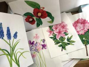 水彩色鉛筆で描いた花
